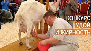 Самая высокоудойная, жирномолочная коза второй Всероссийской выставке  молочного козоводства.