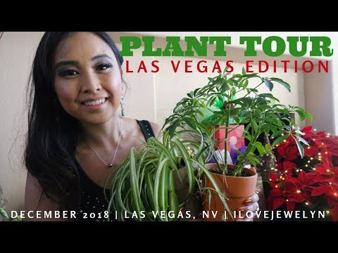 PLANT TOUR: Las Vegas edition | December 2018 | ILOVEJEWELYN
