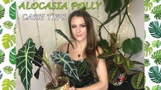 Alocasia Polly Care Tips!