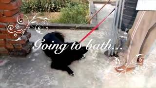 """My Doggie full day lifeStyle 