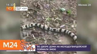Смотреть видео Во дворе дома на западе Москвы поймали змею - Москва 24 онлайн