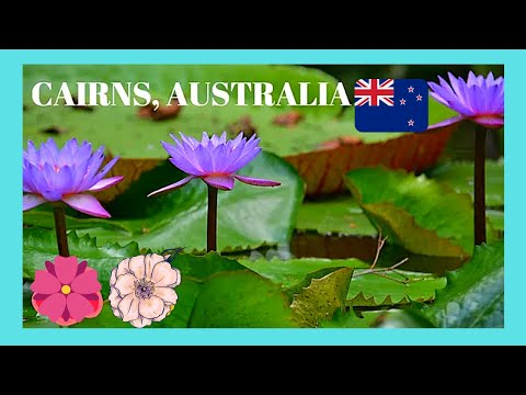 The spectacular botanic gardens and tropical forest in Cairns, Australia