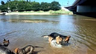 暑いのでパパのachillesとママのkareenaと一緒にAnge 2回目の川遊び An...