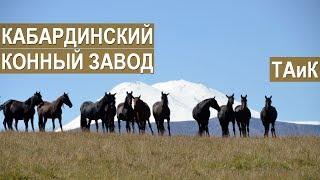 Кабардинский конный завод ТАиК. История создания. Кабардино-Балкария, Приэльбрусье