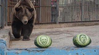 Un oso y un tigre predicen en Siberia quién ganará las elecciones en Estados Unidos