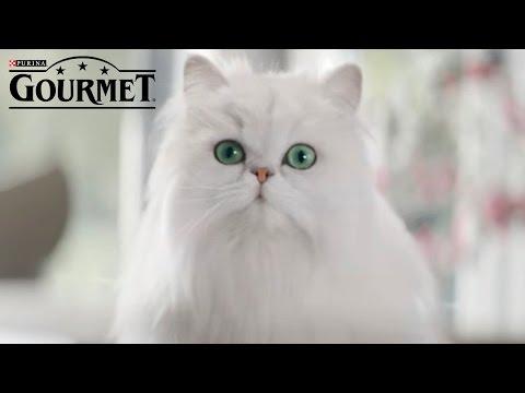 Γάτες - Συμβουλή Νο.3 για απόλυτη απόλαυση GOURMET® | PURINA® Greece