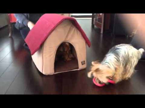 animal-planet-dog-bed/house