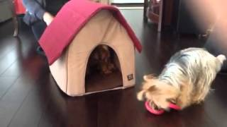 Animal Planet Dog Bed/house