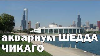 Shedd Aquarium Chicago (Аквариум Шедда в Чикаго)(Аквариум Шедда в Чикаго. Самые большие океанариумы мира. Океанариум в Чикаго. Достопримечательности Чикаго..., 2015-01-18T14:19:53.000Z)