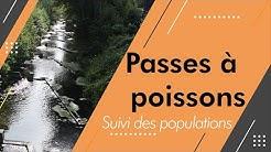 Résultats de l'étude des passes à poissons de Thun Saint Amand