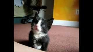 Самые милые котята (Часть 2) / Very sweet kettens (Part 2)