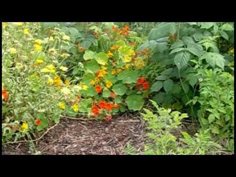 1 5 Permakultur Eine Führung Durch Den Garten YouTube