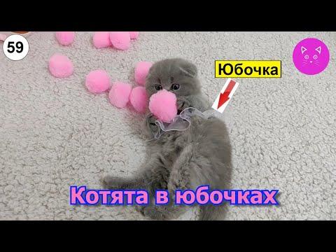 Котята в юбочках