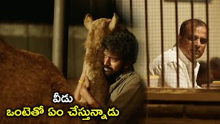 వీడు ఒంటెతో ఏం చేస్తున్నాడు | 2021 Latest Telugu Movie Scenes | Dear Saraa | Vikranth