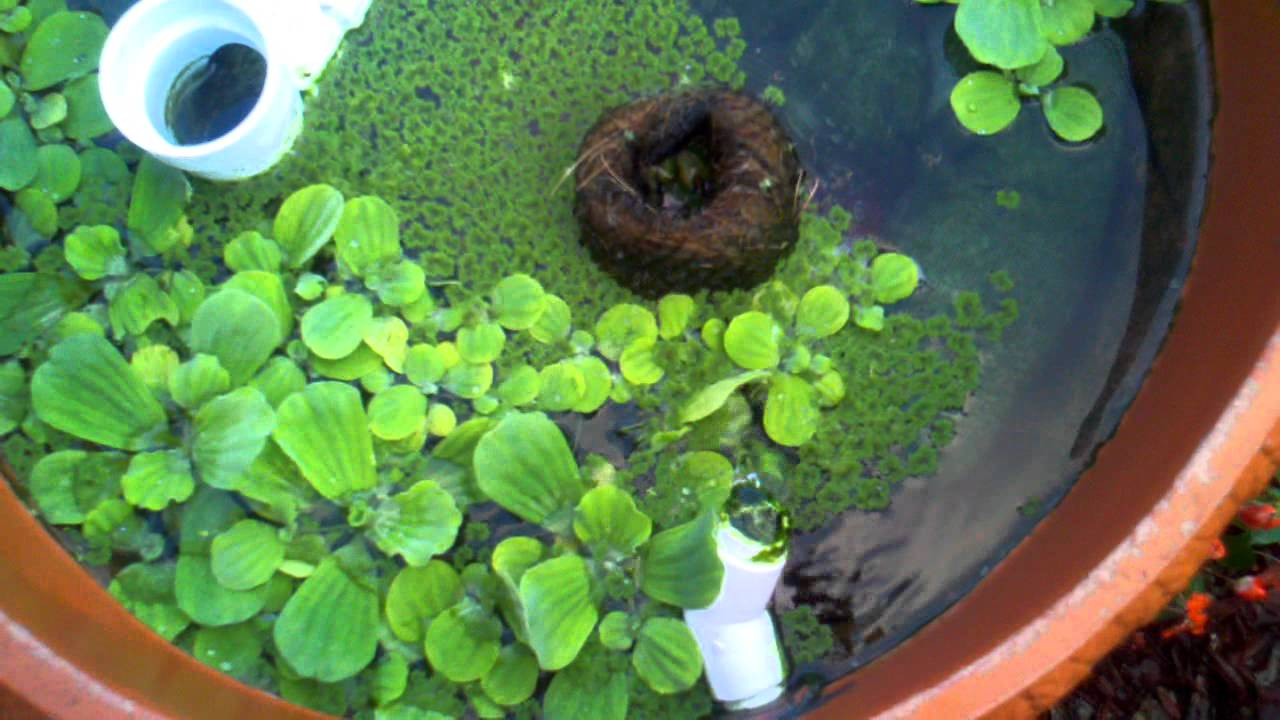 Diy koi pond filter youtube for Homemade koi pond filter