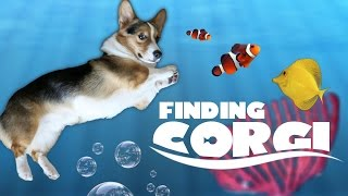 CORGI CARES FOR NEW FISH TANK FRIENDS - Life After College: Ep. 476 thumbnail