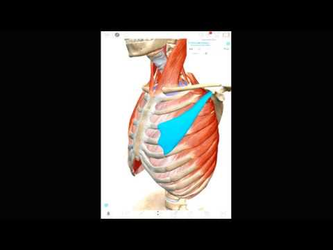 HUMAN ANATOMY: ATLAS 2020: ANDROID DOWNLOAD! ATLAS 2020 APK + DATA
