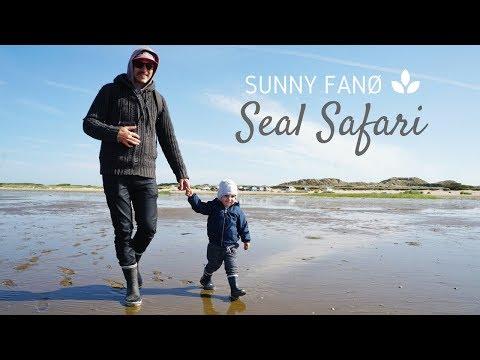 Family Seal Safari in Wadden Sea National Park - Denmark   Fanoe Travel Video