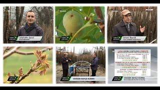 Cevizde Bahçe Kurulumu 4.Bölüm | Ceviz Bahçesi Kurma