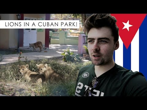 CUBA TRAVEL VLOG 4: There were LIONS in the park