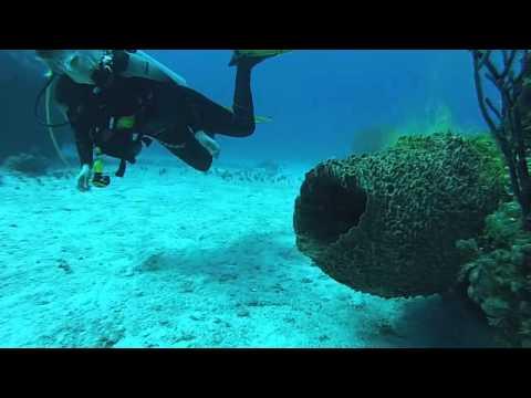 Giant Barrel Sponge Filters Fluorescent Marker