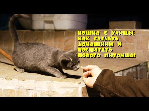 Воспитание кота в домашних условиях