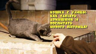 Кошка с улицы: как сделать домашним и воспитать нового питомца?
