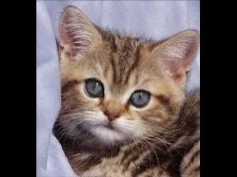HAPPY BIRTHDAY !  From The Birthday Kitten