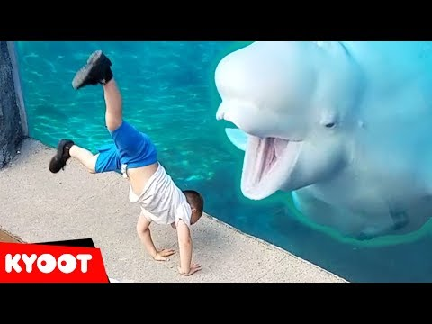 Beluga Whale Is AMAZED By Tricks!  | Funny Aquarium Videos