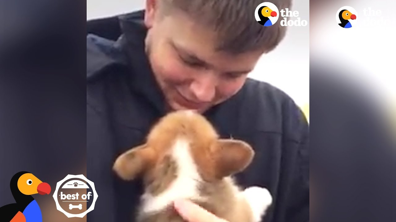 PUPPY SURPRISES: People Get the Most Amazing Surprise