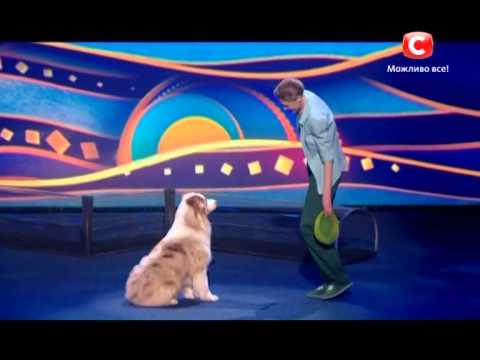 The happy dog really enjoys frisbee freestyle on Ukraine's got talent