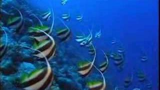 CORAL REEF (La barriera corallina  in lingua italiana nel mio sito www.ideavideo.it)