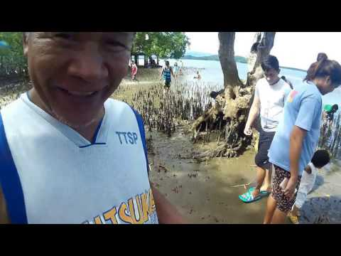 Mangrove Forest Boardwalk : Tanjay City