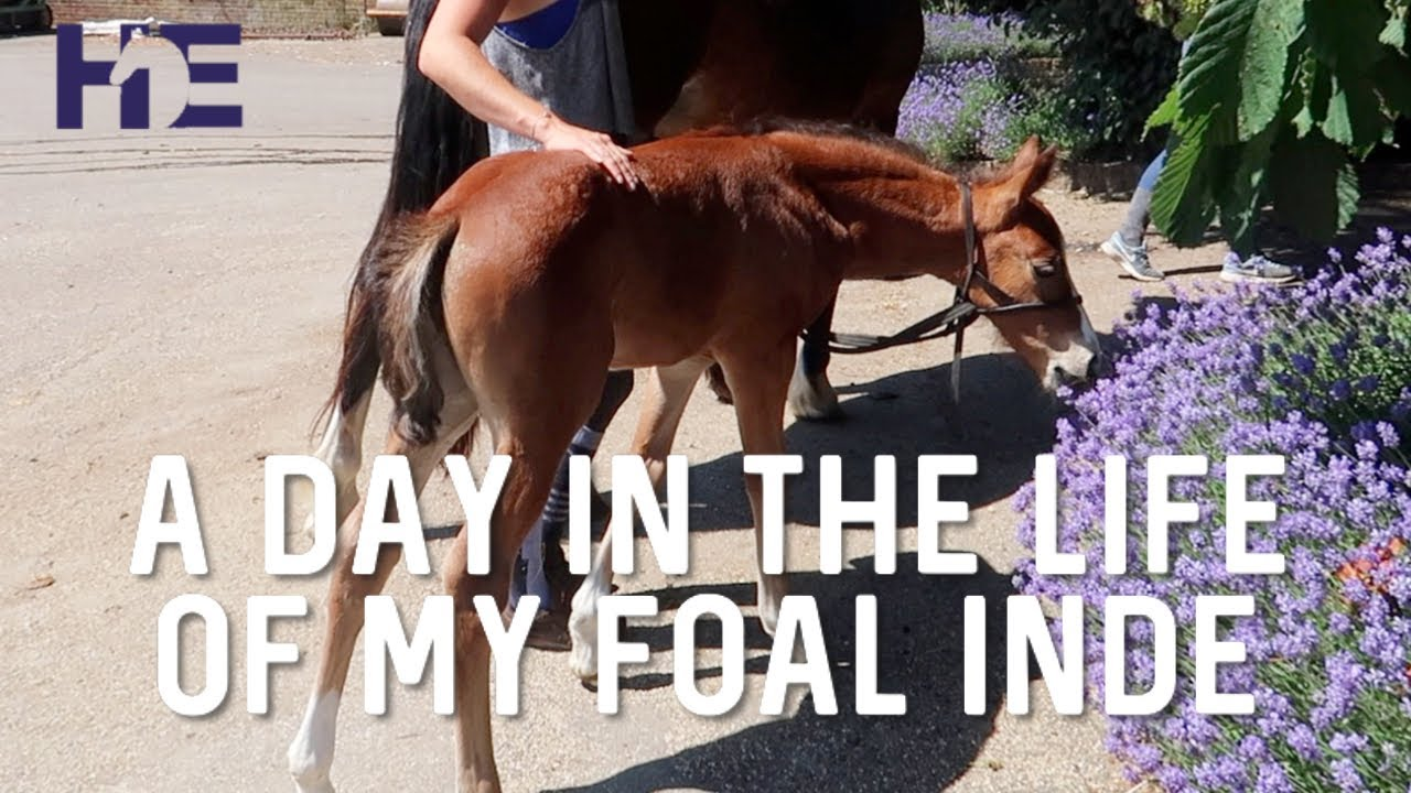 A DAY IN THE LIFE OF MY TWO WEEK OLD FOAL | HACKETT EQUINE