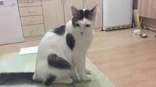 Konuşan kedi.Akıllı kedi.Sevimli kedi ŞANS