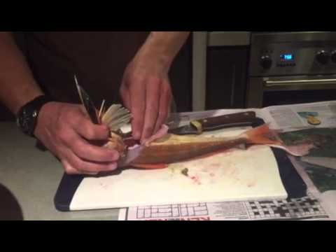 How To Fillet NZ Gurnard In 2 Minutes