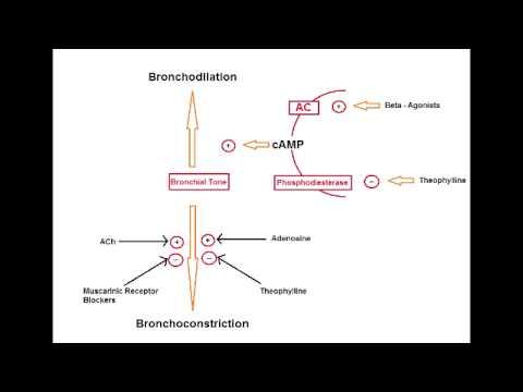 Asthma Drugs – B2 Agonists (Albuterol, salmeterol & formoterol)