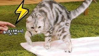 처음 경험한 정전기에 고양이가 충격먹다!