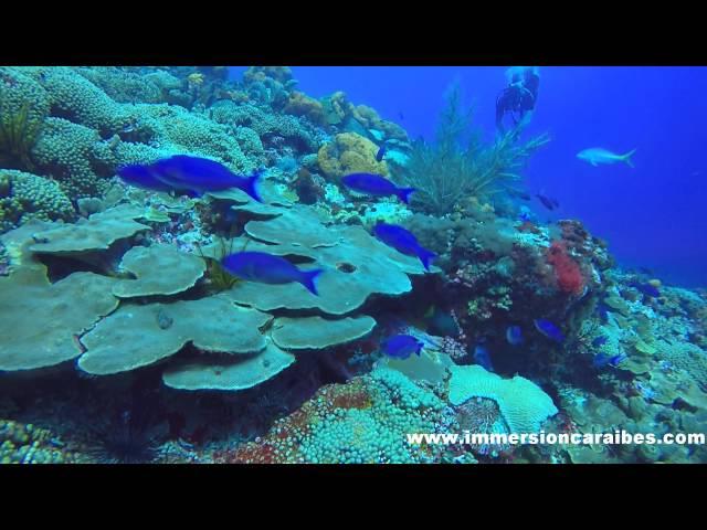 Le Rocher du Diamant Martinique avec Plongée Immersion Caraïbes