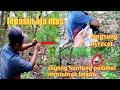 Cara Mudah Pikat Burung Kecil Menggunakan Jamin Langsung Dapat Yang Gacor Bro  Mp3 - Mp4 Download