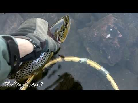 Dry Fly Fishing For Wild Brown Trout.