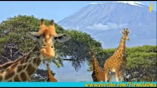 развивающие мультфильмы про животные и их особености