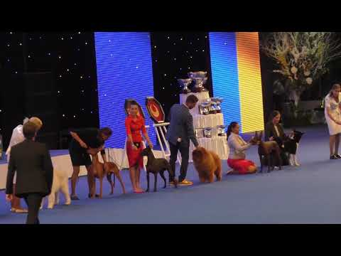 EURO DOG SHOW 2017. Best in Group 5