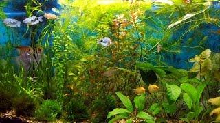 Смотреть видео аквариум обслуживание