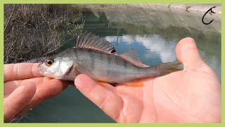 Ultralight perch fishing on a small lake ultra light jigging with small jig heads and micro lures
