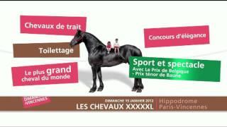 Les dimanches à Vincennes - Les Chevaux XXXXXL - Dimanche 15 janvier 2012