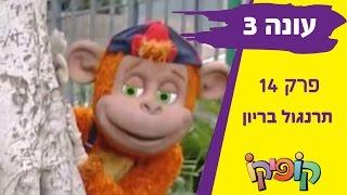 קופיקו עונה 3 פרק 14   תרנגול בריון