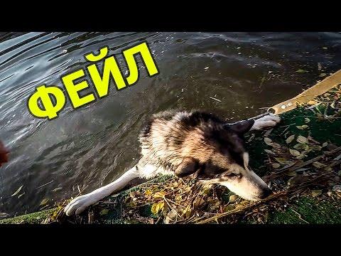Мокрая прогулка маламут и хаски/ Husky and malamute wet walk
