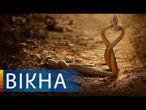 Атака зміїв в