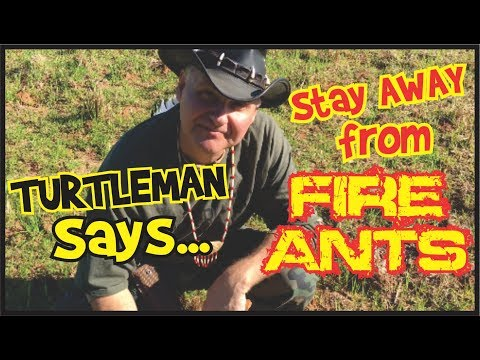turtleman-says-stay-away-from-fire-ants!